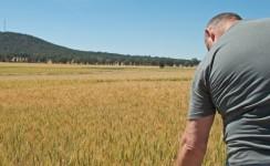 subentro in agricoltura italia