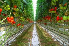 serricoltura, finanziamento fondo perduto