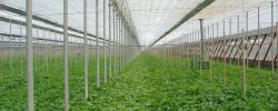 serricoltura credito alle imprese agricole