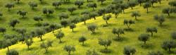 Agricoltura biologica VS Agricoltura integrata