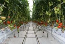 agricoltura fuori suolo