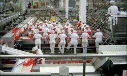 stabilimento agroalimentare trasformazione prodotti agricoli