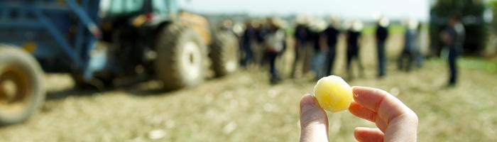 8 strumenti per l'Agribusiness