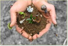 Ambiente Sicilia Srl realizza sistemi per il recupero del paesaggio ed è fornitore delle specie autoctone presenti in SIcilia