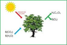 fotosintesi piante vive