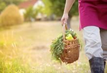 Al via gli Incentivi per l'assunzione in agricoltura di giovani tra 18 e 35 anni