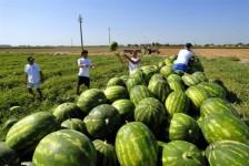 premio giovani agricoltura