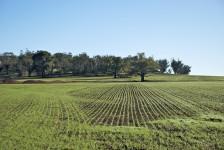 investimento-terreni-agricoli-vicenza[1]