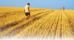 insediamento giovani agricoltura