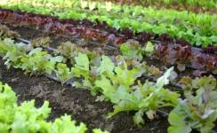 Agricoltura-biologica-standard-di-produzione-nelle-coltivazioni-vegetali-e1375115386643[1]