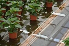 Subirrigazione in serra per piante in vaso ed ornamentali