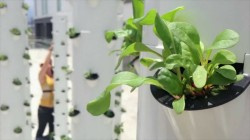 Sistema coltivazione aeroponica a colonne