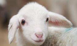 erbe officinali alla dieta alimentare animali