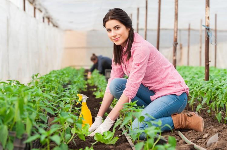 come entrare in agricoltura