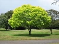 riduzione energia albero