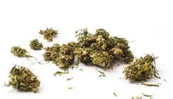 cannabis-legale-italia