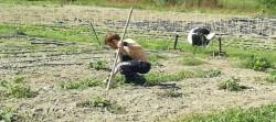 lavoratore della terra soggetto a tumore pelle
