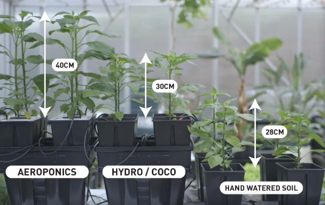 Il sistema aeroponico fa crescere le piante più velocemente