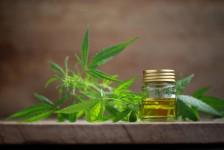 marijuana medica mercato americano