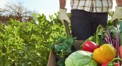 PSR Sicilia la nuova sotto misura 4,1. Investimenti nelle aziende agricole