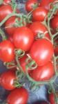 pomodoro senza nichel
