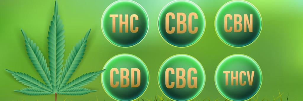 CBD,THC,CBC,CBN,CBG,THCV Natural Cannabinoids in Cannabis.Vector