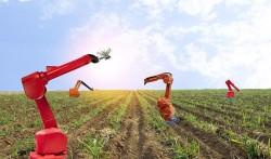 Agricoltura. Bando Acquisto terreni da parte di giovani  dopo il 31 luglio 2020