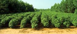 Agricoltura fondo perduto e finanziamento a tasso zero