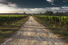 Imprese agricole finanziamento fino a 25 mila euro