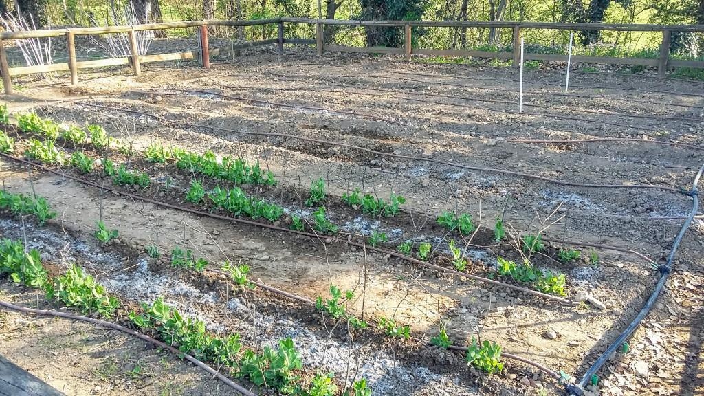 Agricoltura Urbana Parco di Monza